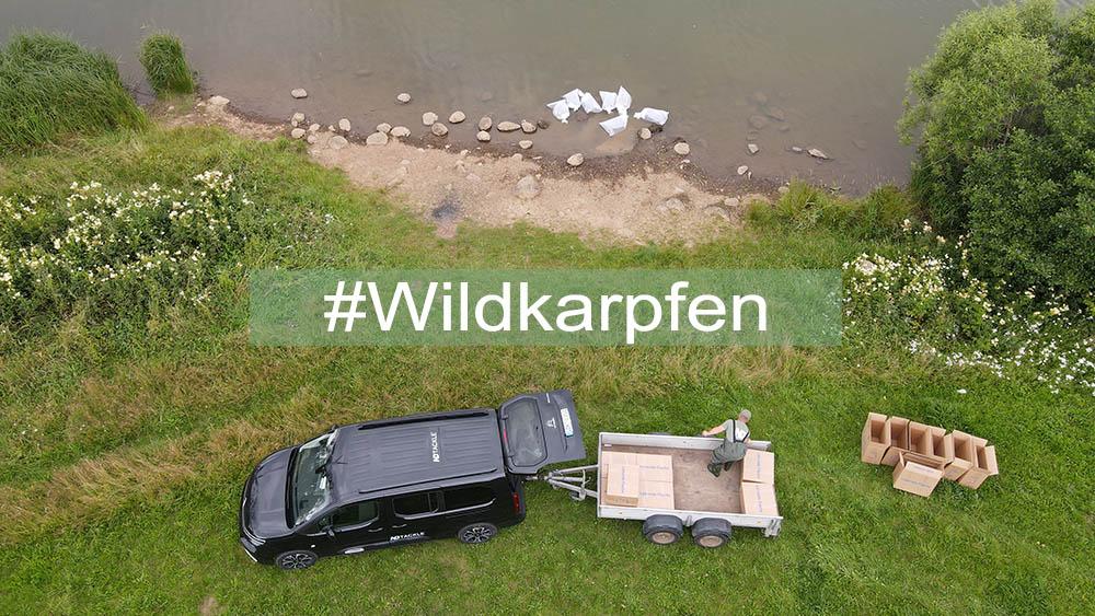 Wildkarpfen für Driedorf